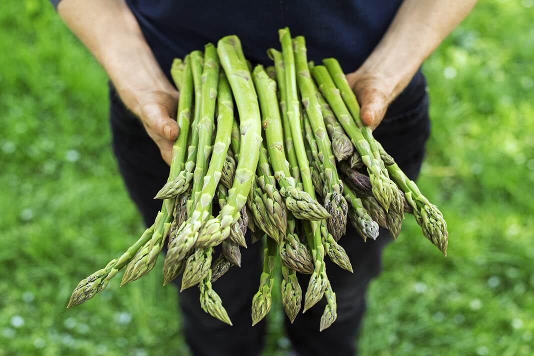 Asparagus for Cancer