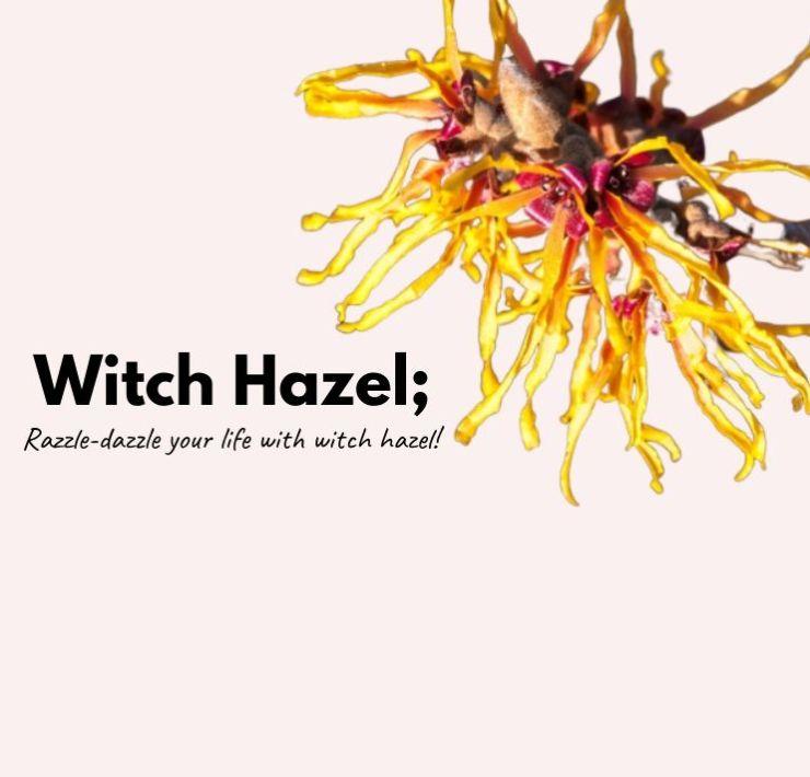 Benefits Of Witch Hazel