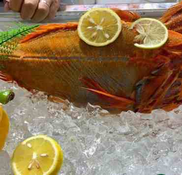 Orange roughy fish