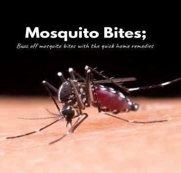 mosquito bites.