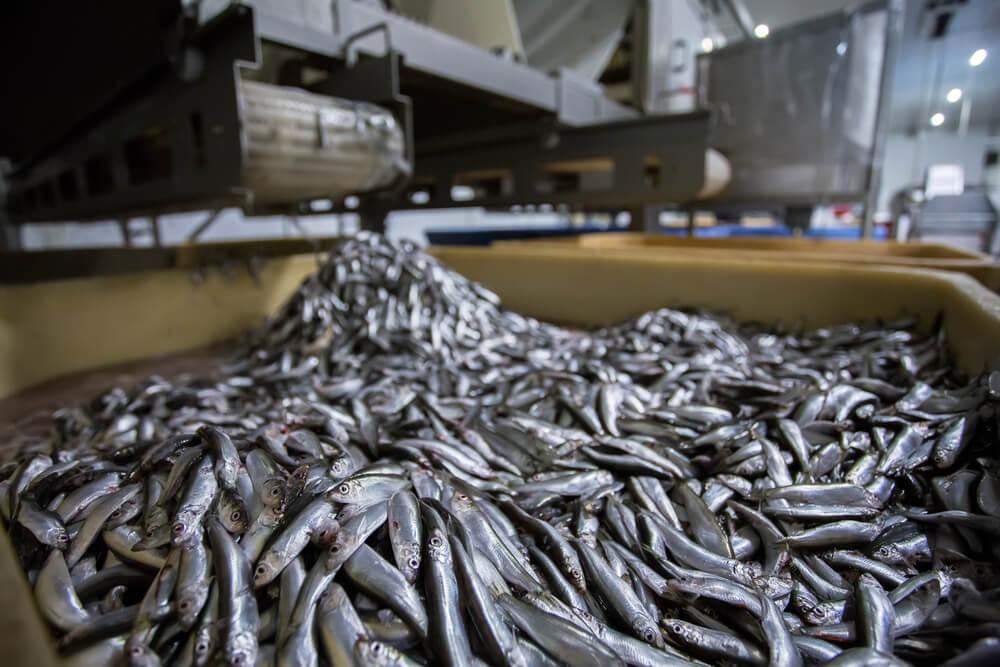 Fishing Process