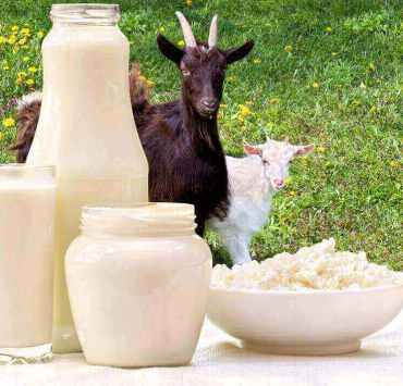 benefits of goat milk