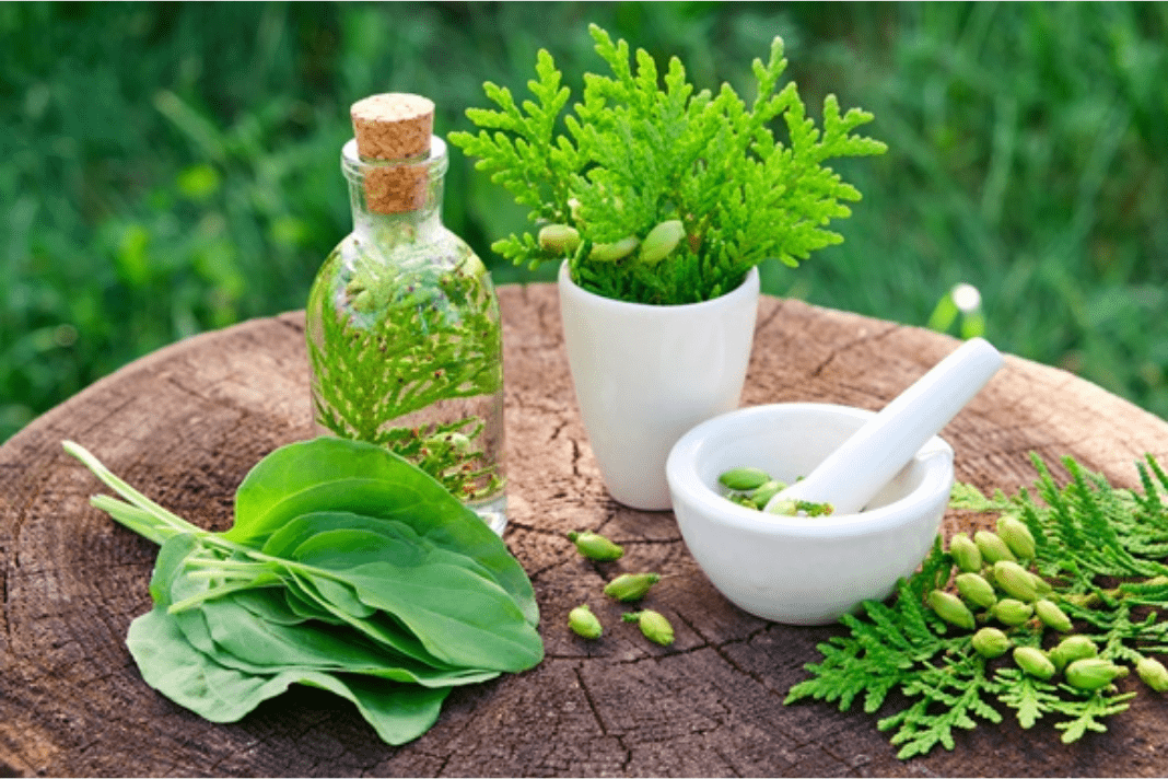 Herbal Plants to grow at home