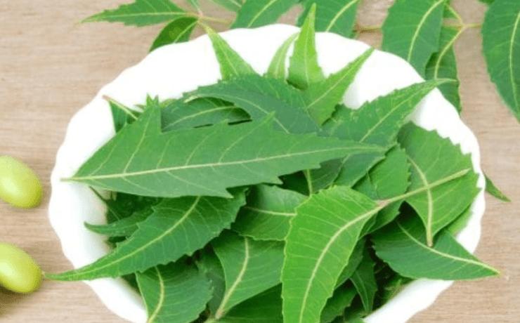Benefits of Neem Leaves