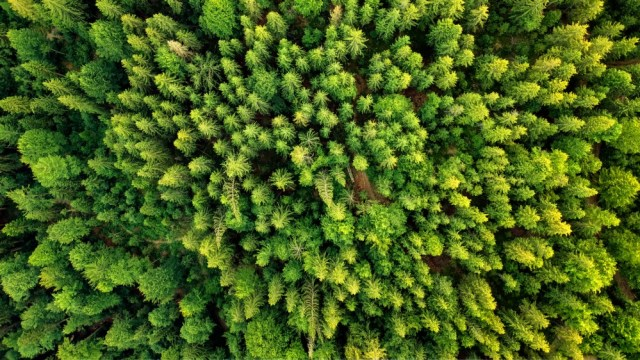 Aerial view of hot summer forest