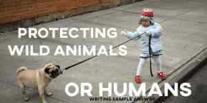 ielts writing task 2 sample answer essay protecting wild animals or humans