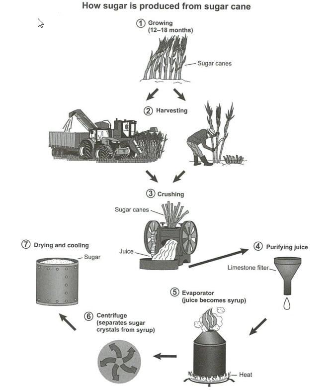 IELTS essay cambridge 16 sugar cane