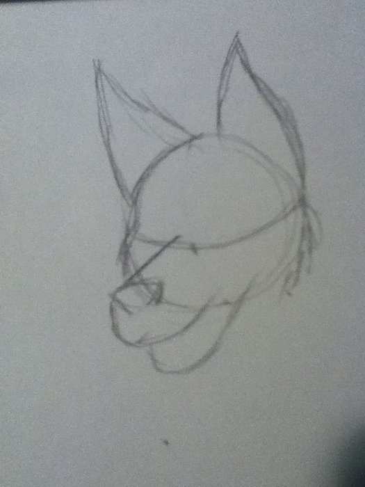 How To Draw Furry Heads : furry, heads, ❤️How, Furries, Guide❤️