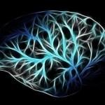 Neural Activity Sheds Light On The Origins Of Consciousness