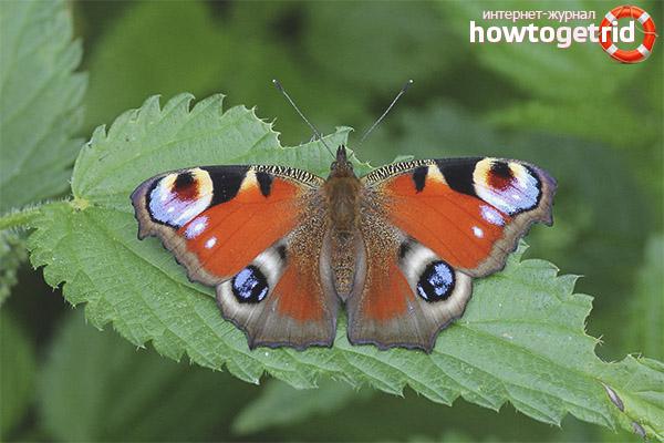 leptiri tijekom izlaska blair datira fatwa