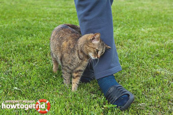 Почему кот трется об ноги