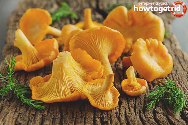 Суп грибной горчит что делать. Почему горчат грибы? Лисички, замороженные в бульоне
