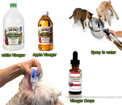 15 How Does Apple Cider Vinegar Kill Fleas Best Acv White