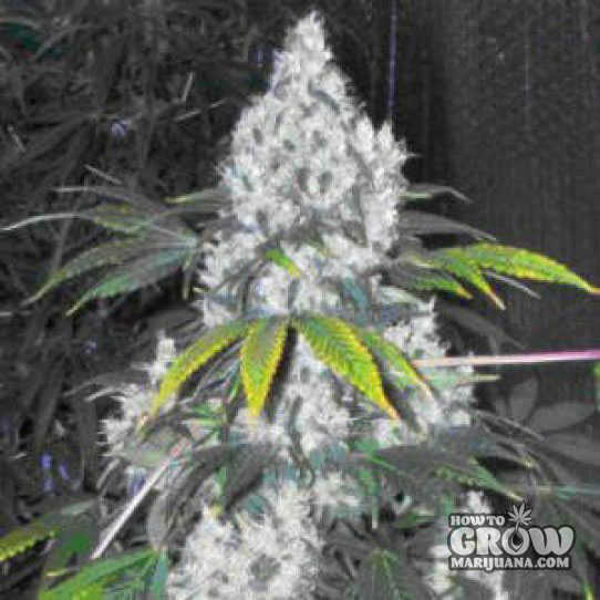 Hydroponic Grow Box Reviews