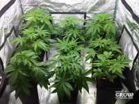 Grow Tent  Hydroponic Tents Reviewed