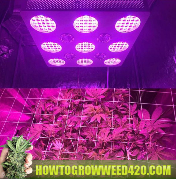 marijuana grow LED light