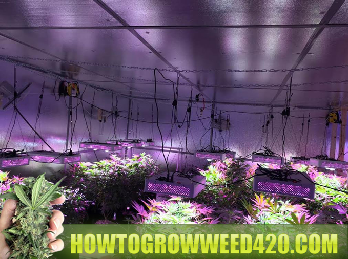 ryan rileys LED grow room