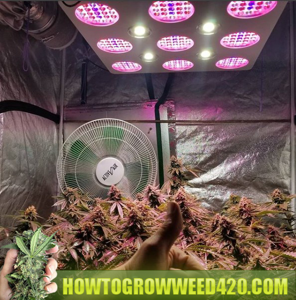 ryan rileys marijuana grow room