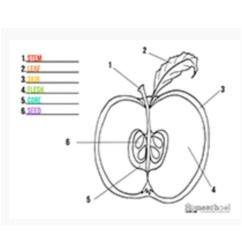 Diagram Of An Apple Worksheet Dual Capacitor Ceiling Fan Wiring Usable Life Cycle A Human Goodsnyc