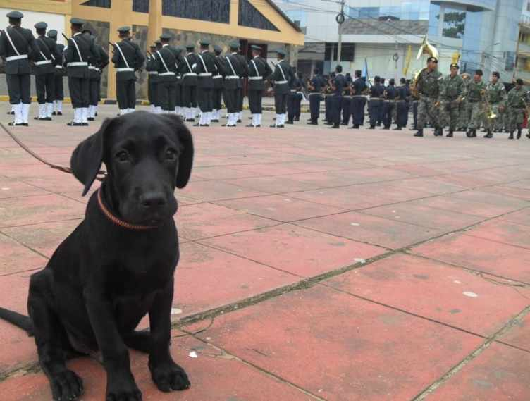 Max Peruvian Labrador