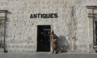 El Anticuario antiques store in Arequipa,