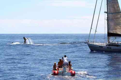 Whale watching Mancora - peru travel itinerary