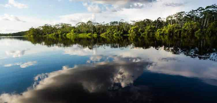 Lake Sandoval Beautiful Oxbox Lake in Tambopata National Reserve in Peruvian Amazon Jungle - iquitos