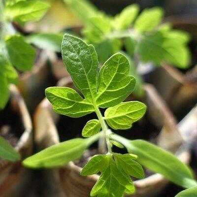 plant-999375_1280 - Copy