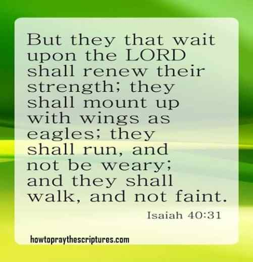But they that wait upon the LORD shall renew their strength