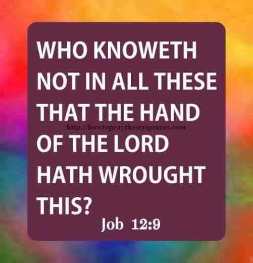 Who Knoweth Not In Job 12-9