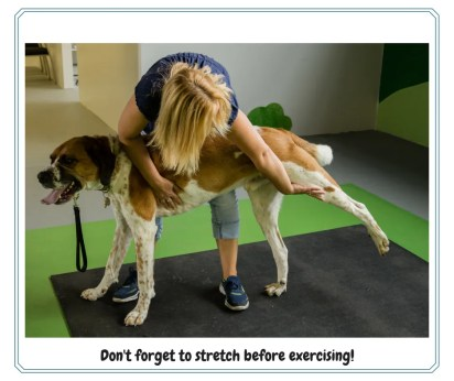 Dog stretching