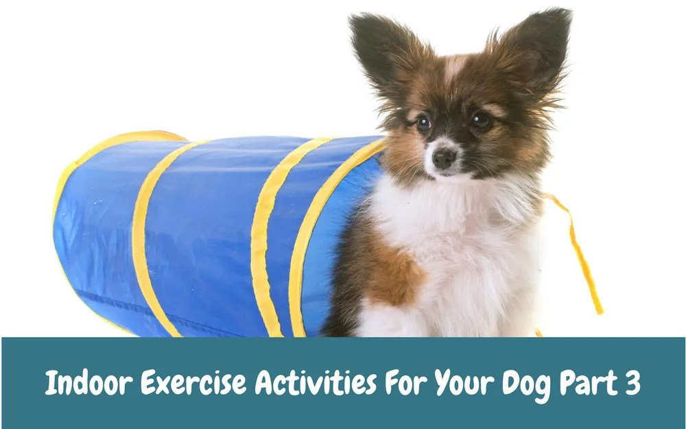 Indoor Exercise Activities for Your Dog Part 3