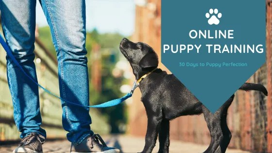 Online Puppy Training