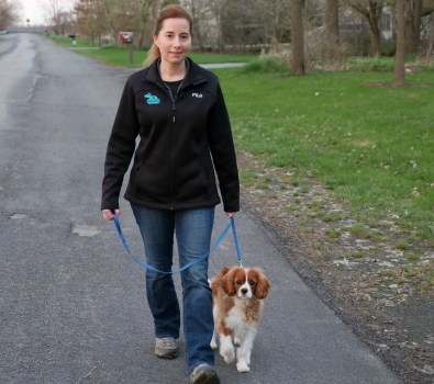 Puppy walking at a woman's side.