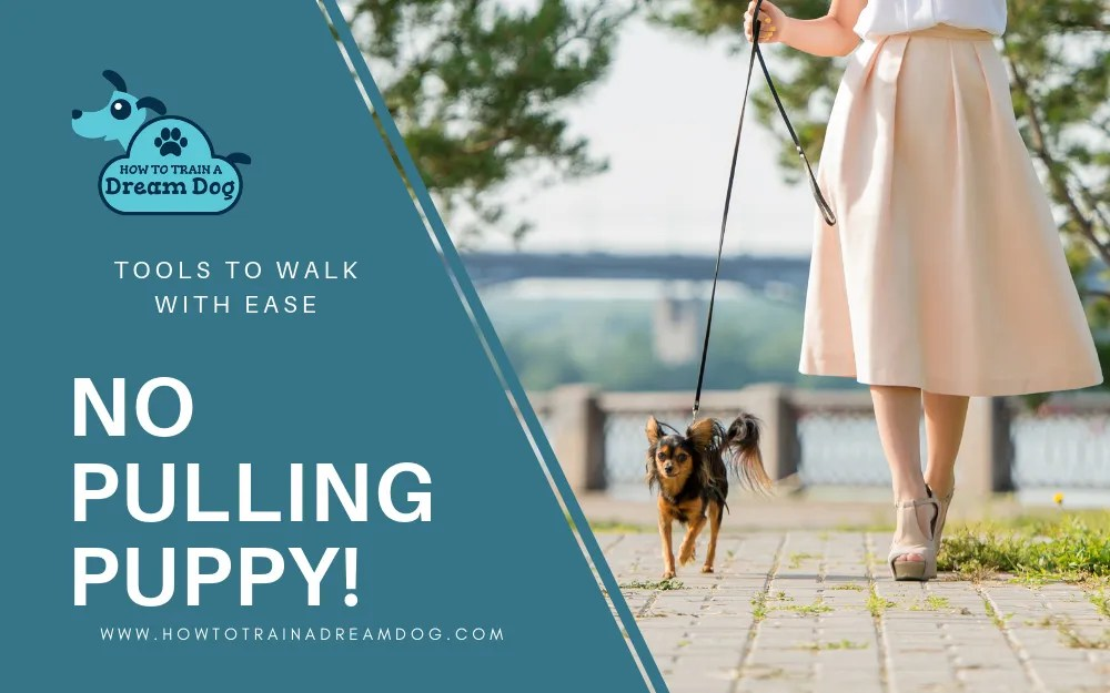 No Pulling Puppy! Tools To Walk With Ease!