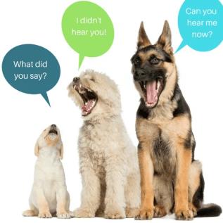 Dog talking