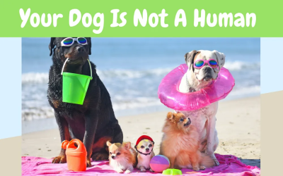 Your Dog Is Not A Human