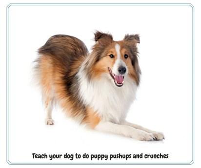 dog push ups