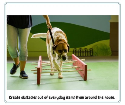 indoor exercise for dogs