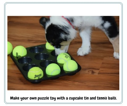 dog puzzle toy game