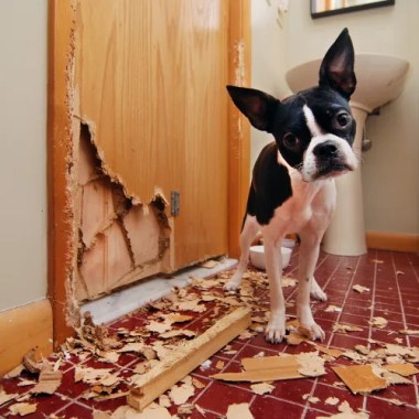 stop a puppy from chewing, biting,