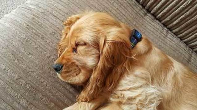 puppy sleeping on couch