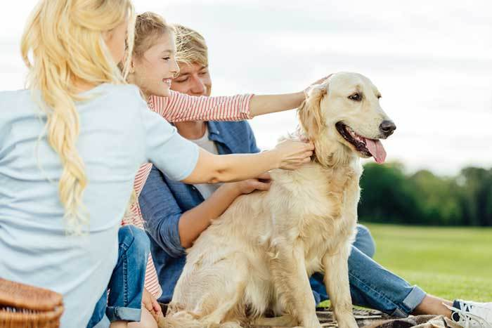 dog calm around strangers