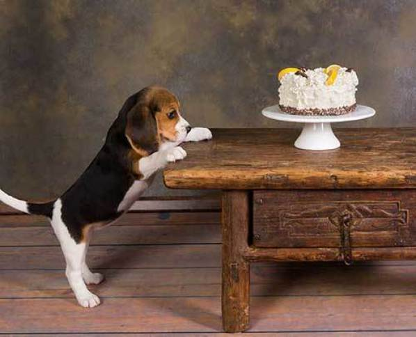 dog constantly begging for food