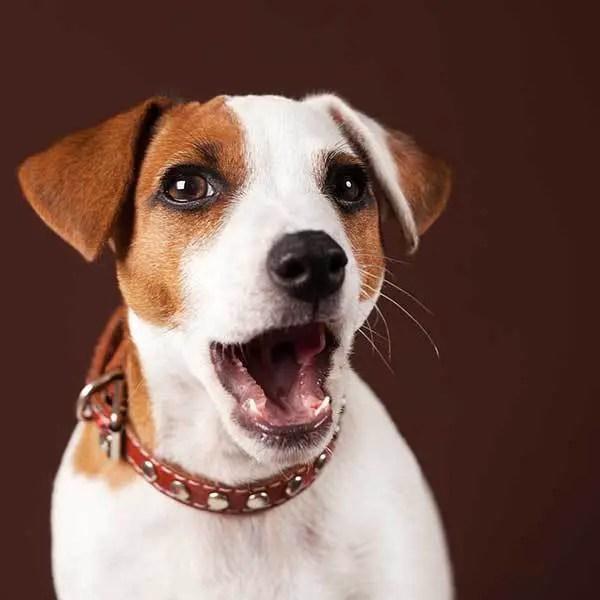 cute dog sneezing