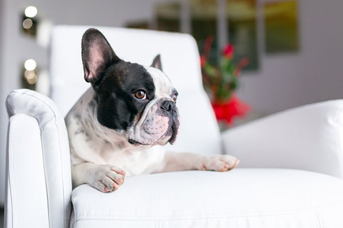 Reasons Why Dogs Bark At the TV