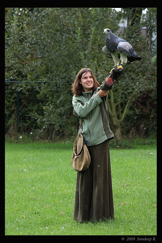 Chilean-blue-eagle-with-falconer