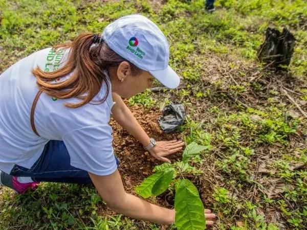 3. Voluntariado Embajadores Verdes