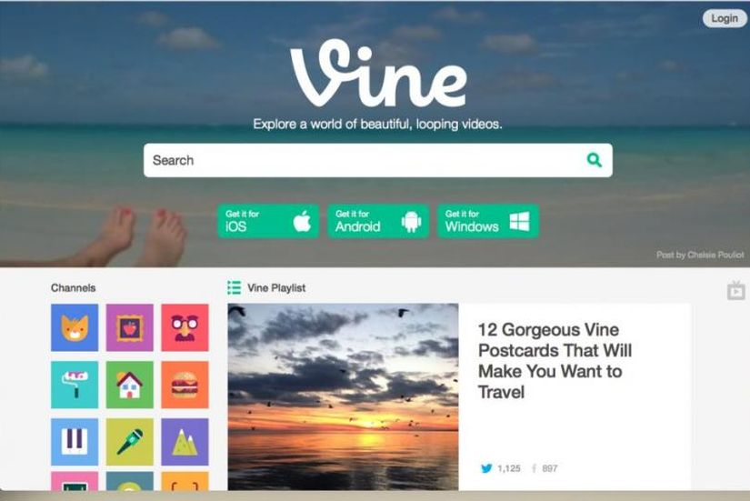 vine design