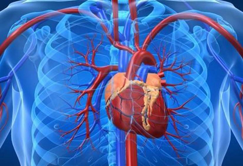 Una-terapia-génica-convierte-células-del-corazón-en-marcapasos